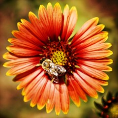 All is connected... no one thing can change by itself. ➖Paul Hawken . #bee #beautiful #flower #happy #earthday #garden #flowerporn #flowerpower #flowerstagram #pretty #flowersofinstagram #nature #safetyharbor #tampabay #florida