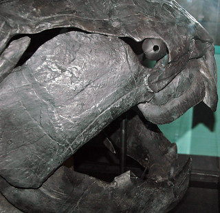 Dunkleosteus terrelli (fossil fish) (Cleveland Shale Member, Ohio Shale, Upper Devonian; Rocky River Valley, Cleveland, Ohio, USA) 44