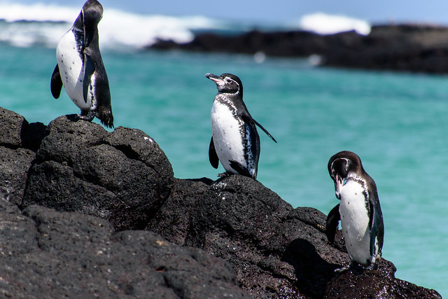Penguin Hike