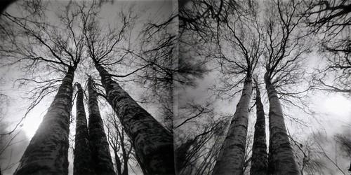 pinhole pinholetree realitysosubtle rss6x6f loch f160