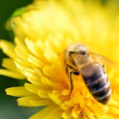 Bienchen und Blümchen 01