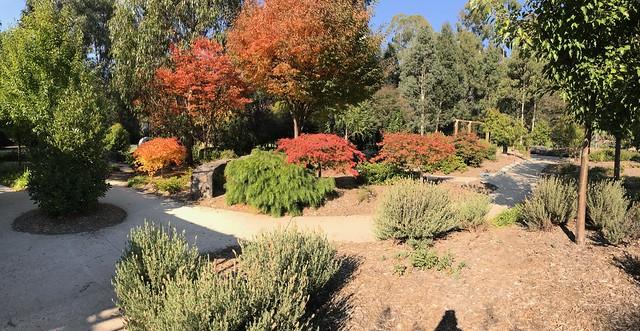 Autumn Colour, Gallipoli Park, Marysville, Victoria