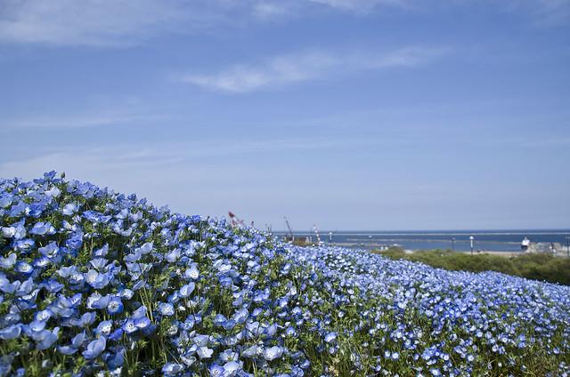 Flower, Ocean and Sky /花連海,海連天/花、海と空