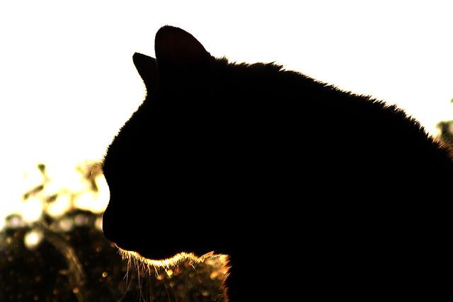 Alice's silhouette