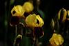 Bunch of Iris's