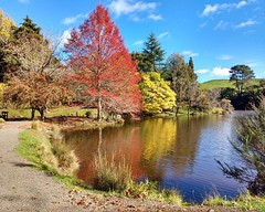 Colours of Autumn in NZ