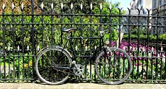 Bicycle Blending Into Its Surroundings