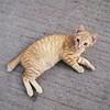 #kucing #ucing #kitten #cat #chat #katze #kätzchen #ねこ #고양이 #貓 #felis #silvestris #catus #gato #γάτα #кошка #кот #mèo #miau #gatto #kitty #kat #katt #kissa #meow #macska #قط