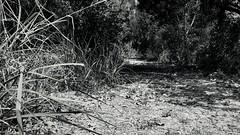 A Path II