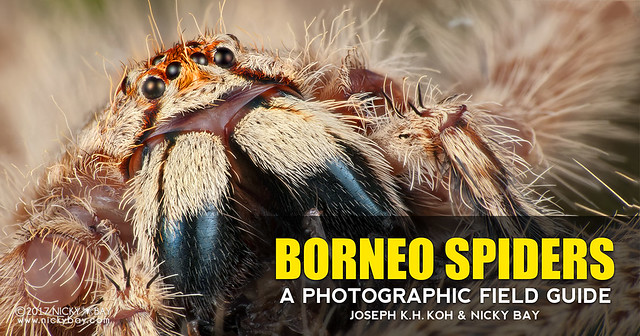 Preview of Borneo Spiders: A Photographic Field Guide