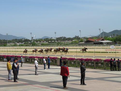 釜山慶南競馬場の直線の攻防