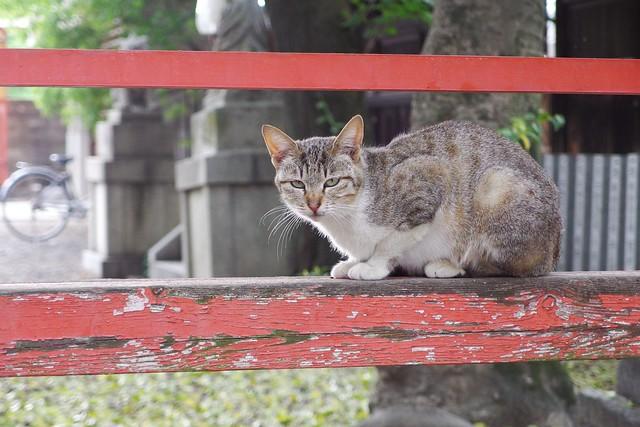 Today's Cat@2017-05-05