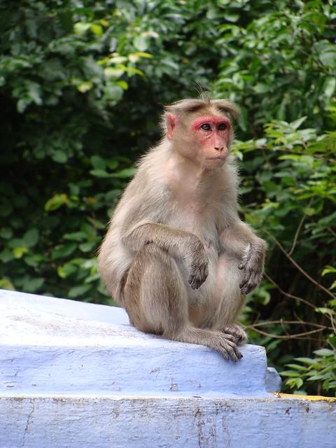 A monkey at Monkey, Sony DSC-H10
