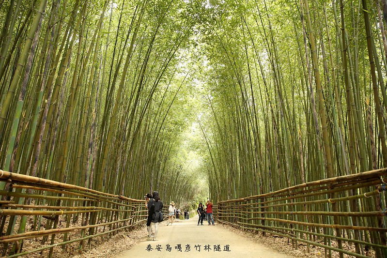 苗栗泰安-烏嘎彥竹林隧道-台灣版嵐山 (1)