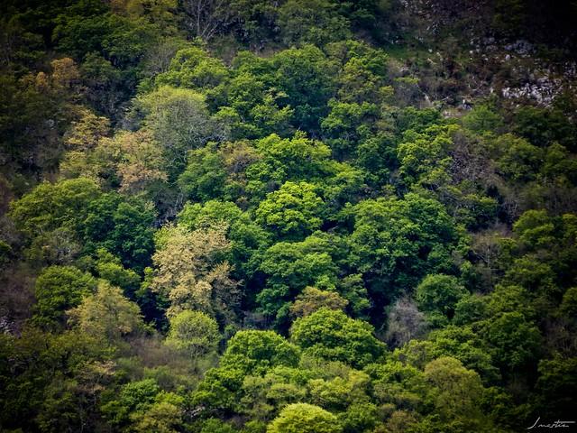 Bosques de Asturias, Fujifilm FinePix SL1000