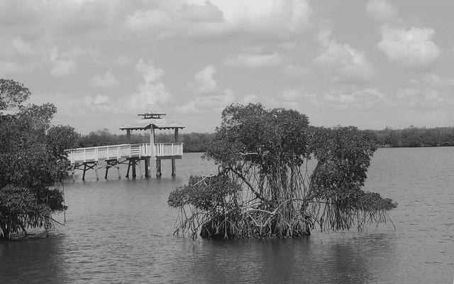 Mangroves B/W, Nikon COOLPIX L830
