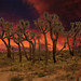 Joshua Trees at Sunset by jodice