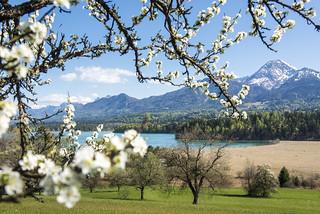 Frühling am Faaker See