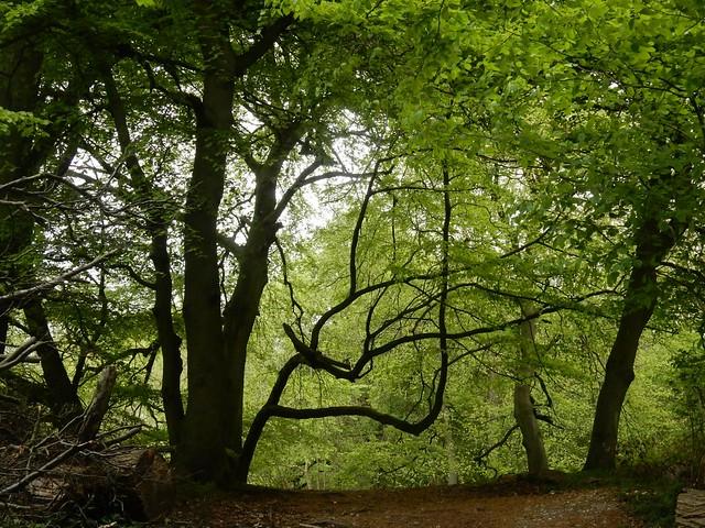 Tree silhouettes  1, Nikon COOLPIX S9700