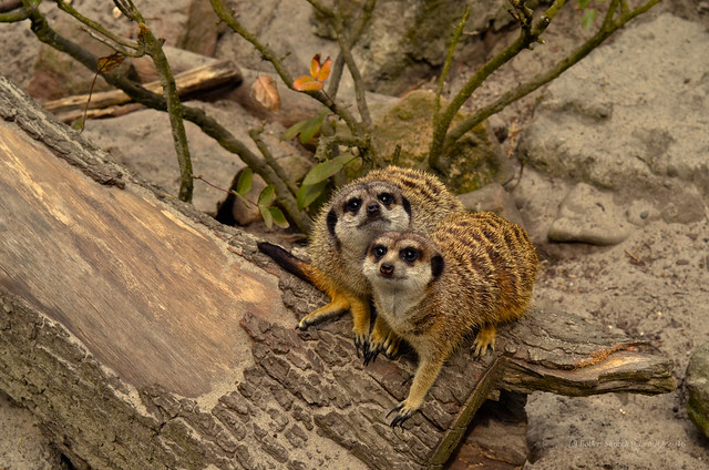 Cracow - zoo