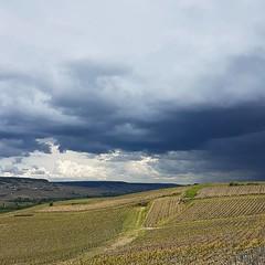 Ça gronde au #loin qui se rapproche. #Vallée #Marne #saison17 #Champagne #Tarlant #Vignerons #depuis1687