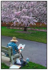 Cherry Blossom Festival in Brooklyn Botanical Gardens III | New York City