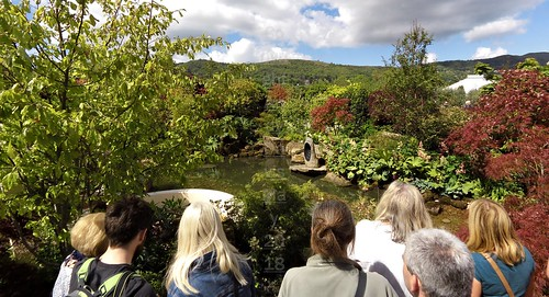 8 water garden