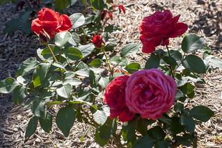 Brookside Gardens  (57)
