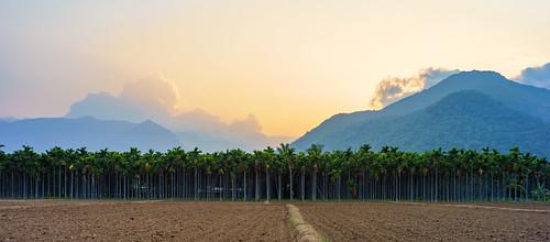 sunset india palms trees forest golden mountain sky tamil tamilnadu coimbatore vellingiri hill yoga ashram isha voigtlanderultron28mmf2 voigtlander ultron 28mm