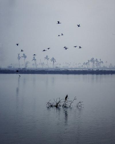beforesunrise crows morning blue river water haze cochin kadamakkudy kerala