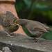 Open Wide by Martyn William's Birds
