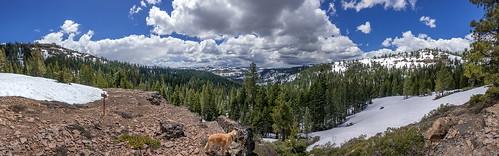royalgorgearea donnersummitarea panorama snow spring clouds goldenretriever dog canine