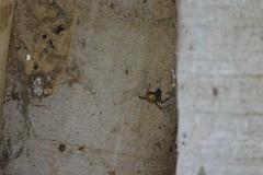 Entebbe, Uganda - Entebbe Botanical Gardens - Spider