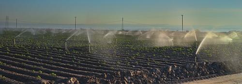centralvalley sunset sprinkers farm farmland water irrigation farming outdoor landscape