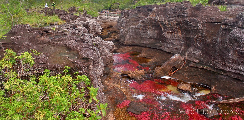 Caño Cristales - The most beautiful river in the world