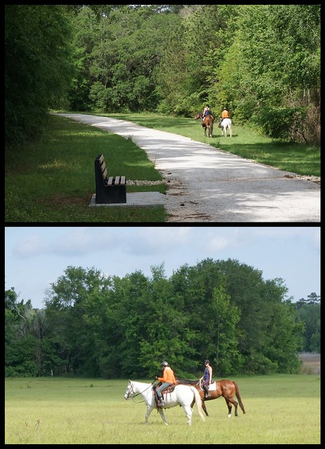 Horses on the greenway