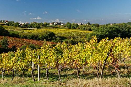 Gironde: premières côtes de Bordeaux - Environs de Cadillac - Laroque