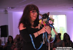 2017 Little Shelter Rescue Runway Fashion Show At FMLI