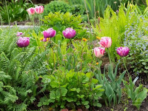 Hügelbeet im Frühjahr