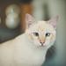 the cat. by Jordi Corbilla Photography