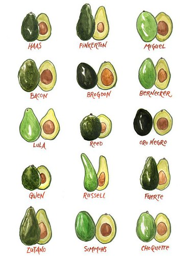 19 Benefits Of Avocado