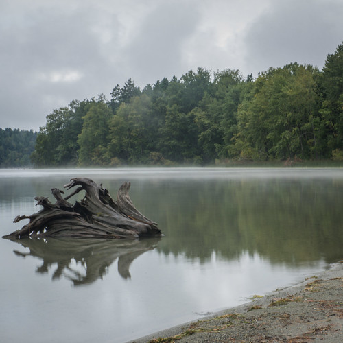 elklake saanich saanichbc vancouverisland victoriabc victoria yyj bc britishcolumbia canada landscape lake reflections reflection tree trees beach overcast sony sonya7m2 a7m2 fog mist