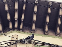 Obviously This Pigeon Reads Proust