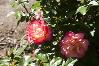 Brookside Gardens  (49)