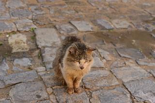 23000: trash cat, el jadida edition