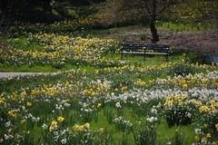 金, 2017-04-14 14:18 - New York Botanical Garden (Bronx)