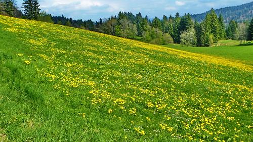 green-yellow fields