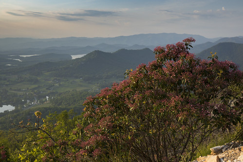 mountain laurel bush grow spring mountaintop flower shrub landscape evening dusk shadows lake dslr 5d markiv leaves green clouds sky
