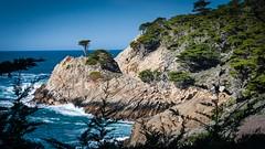 Long Cypress of Point Lobos