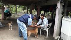 Alcaldía de Chone realizó campaña de desparacitación canina en comunidades de Canuto